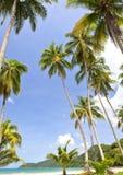 Overzees, hemel en palm Royalty-vrije Stock Foto