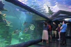 Overzees het Levensaquarium in Sydney New South Wales Australia stock afbeeldingen