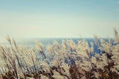 Overzees landschap 1 Royalty-vrije Stock Fotografie