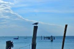 Overzees landschap, houten posten en zeemeeuw Stock Foto