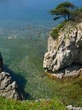 overzees landschap met pijnboomrots   Royalty-vrije Stock Fotografie
