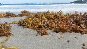 Overzees mos dichtbij de overzeese kust stock foto