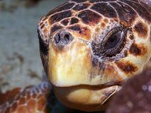 Overzees-schildpad Hoofd Royalty-vrije Stock Foto