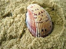 Overzees Shell stock afbeelding