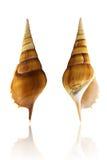 Overzees Shell#3 Royalty-vrije Stock Afbeelding