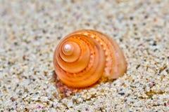 Overzees Shell 1 stock afbeeldingen