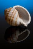 Overzees Shell Royalty-vrije Stock Afbeeldingen