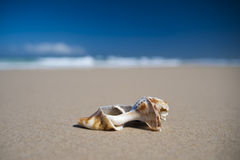 Overzees Shell - Cabarita-Strand Stock Foto