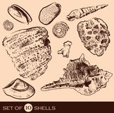 Overzees Shell Collection Originele getrokken hand Royalty-vrije Stock Foto