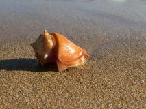Overzees Shell in de kust Royalty-vrije Stock Afbeelding