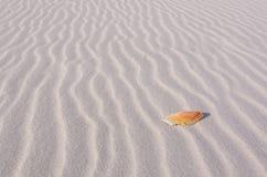 Overzees Shell in de Lijnen van Zand Stock Foto