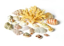 Overzees shell en Koraal dat op wit wordt geïsoleerdc Stock Foto