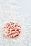 Overzees shell en zout Stock Foto's