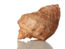 Overzees shell geïsoleerd om wit Stock Foto's
