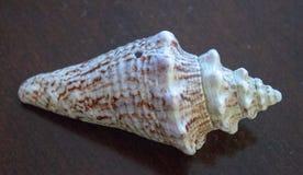 Overzees Shell Images royalty-vrije stock afbeeldingen