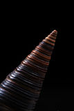 Overzees shell ontwerp Stock Fotografie