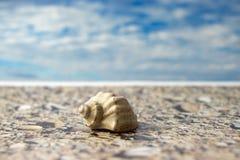 Overzees Shell op het strand tegen de hemel Royalty-vrije Stock Afbeelding