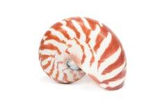 Overzees Shell op witte achtergrond Royalty-vrije Stock Fotografie