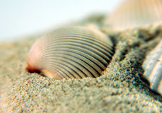 Overzees Shell op zand Stock Foto