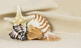 Overzees shell stilleven Royalty-vrije Stock Foto's