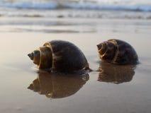 Overzees, shell, strand royalty-vrije stock foto's