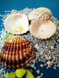 Overzees shells behang Stock Afbeelding