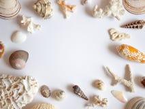 Overzees shells en koralenkader stock foto