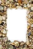 Overzees shells kader Royalty-vrije Stock Fotografie