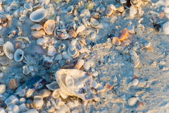 Overzees shells strand Royalty-vrije Stock Afbeelding