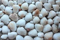Overzees shells zandgrens Stock Foto's