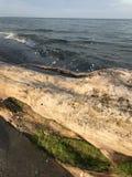 Overzees, strand, water, stomp, zeewier, dalingen, zand, stock afbeelding