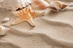 Overzees strandzand en zeeschelpenachtergrond, natuurlijke kuststenen en zeester Stock Afbeelding