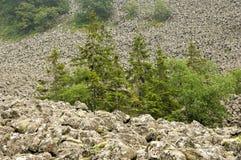 Overzees van basalt Stock Foto