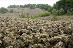 Overzees van basalt Stock Foto's