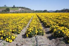 Overzees van bloemen royalty-vrije stock afbeelding