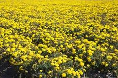 Overzees van bloemen Royalty-vrije Stock Afbeeldingen