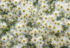 Overzees van bloemen royalty-vrije stock foto