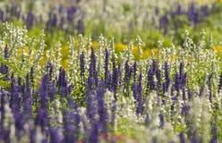 Overzees van bloemen Stock Afbeeldingen