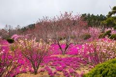 Overzees van bloemen royalty-vrije stock foto's