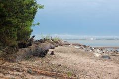 Overzees van de onweerszomer landschap Stock Foto's