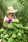 Overzees van Groene Hydrangea hortensia's Stock Foto
