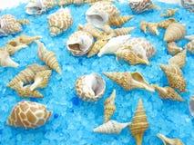 Overzees van het kuuroord shells en zout stock afbeeldingen
