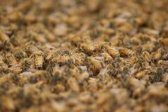 Overzees van honingbijen Royalty-vrije Stock Foto's
