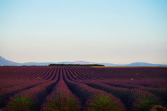 Overzees van Lavendel in Zuid-Frankrijk Stock Afbeelding