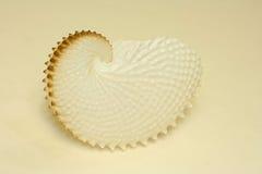 Overzees van Nautilus shell stilleven Royalty-vrije Stock Afbeelding