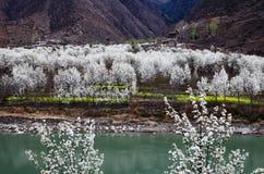 Overzees van peer in tibetan dorp Stock Afbeelding
