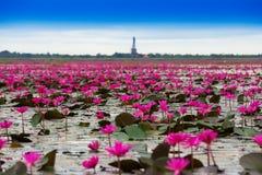 Overzees van rode lotusbloem royalty-vrije stock afbeeldingen