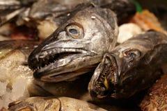 Overzees voedsel. De hoofden van vissen. Stock Afbeeldingen