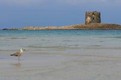 Overzees, zeemeeuw, en de toren stock fotografie