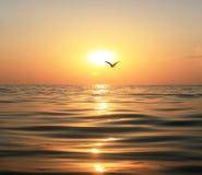 Overzees, zonsondergang en zeemeeuw Royalty-vrije Stock Afbeeldingen